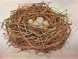 Bird's nest or Janette's hair minus the eggs