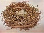 Bird's nest or Janette's hair minus the eggs