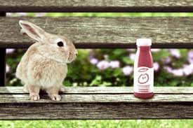 innocent rabbit